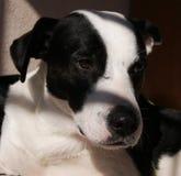 Верный друг собаки вызвал бравый стоковые изображения rf
