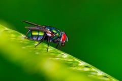 вертел дома мухы шарика Стоковые Фото