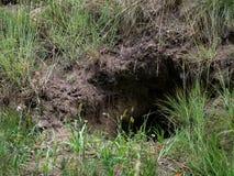 Вертеп конца-вверх дикого животного в лесе лета Стоковая Фотография RF