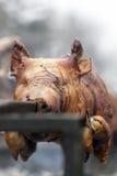 вертел свиньи Стоковое фото RF