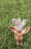 Вертикальная группа в составе пушистые кролики или зайчики на траве Стоковое Изображение