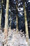 вертикальная зима стоковые изображения