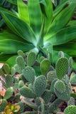 Вертикальная предпосылка кактуса Стоковое Изображение
