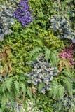вертикальная предпосылка стены сада Стоковое Изображение