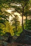 Вертикальная рамка с деревьями и утесами Стоковые Изображения