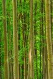 Вертикальная рамка с прямыми стволами дерева Стоковое Изображение RF