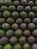 Вертикальная стена авокадоа Стоковая Фотография