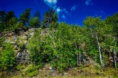 Вертикальная сторона утеса в лесе глуши стоковое изображение rf