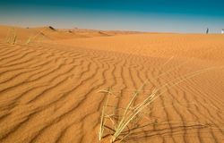 Вертикальные картины песка в пустыне Шарджи Стоковое Фото