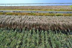 Вертикальные сады или вертикальные поля для культивирования завода павильона Израиля ЭКСПО Милана 2015 стоковое фото