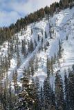 Вертикальный горный вид ландшафта парка зимы, Колорадо стоковое фото