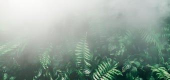 Вертикальный сад с тропическими зелеными лист с туманом и дождем, темными стоковое изображение rf