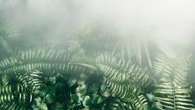Вертикальный сад с тропическими зелеными лист с туманом и дождем, темными стоковое фото rf