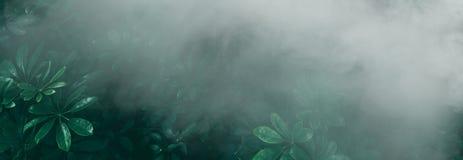 Вертикальный сад с тропическими зелеными лист с туманом и дождем, темными стоковые фотографии rf