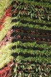 Вертикальный сад Стоковые Изображения RF