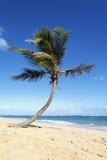 вертикаль вала кокоса Стоковые Фотографии RF