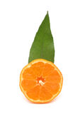 Вертикаль померанца мандарина Clementine Стоковые Изображения RF