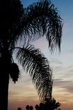 Вертикаль силуэта захода солнца пальмы южной Калифорнии Стоковая Фотография RF