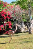 вертикаль gerenuk антилопы Стоковые Изображения
