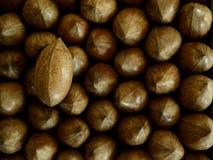 Вертикальная гайка пекана над гайками пекана Стоковая Фотография