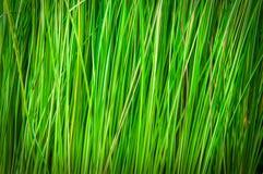 Вертикальная зеленая предпосылка Стоковая Фотография RF