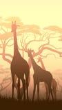Вертикальная иллюстрация одичалых жирафов в африканской саванне захода солнца Стоковые Изображения RF