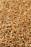 Вертикальная предпосылка семян подсолнуха Стоковое Фото