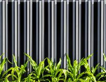 Вертикальная предпосылка фасада стены загородки Стоковые Фотографии RF