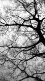 Вертикальное дерево в туманной горе Стоковая Фотография RF
