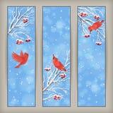 Вертикальные ветви рябины птицы знамен рождества Стоковые Изображения RF