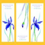 Вертикальные знамена установили с цветком и листьями радужки акварели голубыми на белой предпосылке, нарисованной руке вектора бесплатная иллюстрация