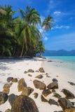 Вертикальные кокосовые пальмы на пляже с белым песком Стоковые Изображения RF