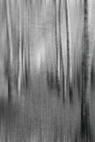 Вертикальные пугающие древесины Стоковые Фото