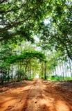 Вертикальный ландшафт дороги фермы окруженной деревьями Стоковые Изображения RF