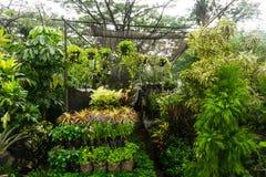 Вертикальный сад аранжировал путем висеть надувательство завода и цветка фото флориста принятым в Джакарту Индонезию Стоковое Изображение