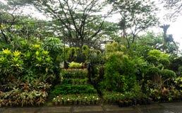 Вертикальный сад аранжировал путем висеть надувательство завода и цветка фото флориста принятым в Джакарту Индонезию Стоковые Изображения