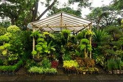 Вертикальный сад аранжировал путем висеть надувательство завода и цветка фото флориста принятым в Джакарту Индонезию Стоковые Фотографии RF