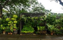 Вертикальный сад аранжировал путем висеть надувательство завода и цветка фото флориста принятым в Джакарту Индонезию Стоковое фото RF