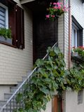 Вертикальный сад виноградины, на перилах лестницы Стоковые Фотографии RF