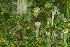 Вертикальный сад в городском патио Стоковые Фото