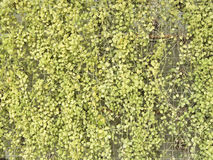 Вертикальный сад на ячеистой сети белого металла Стоковая Фотография RF