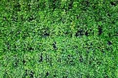 вертикаль сада Стоковое фото RF