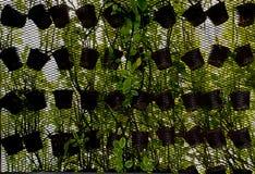 вертикаль сада Стоковые Фото
