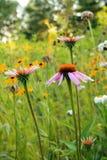 Вертикаль цветка 3 конусов с цветками внутри подпирает Стоковое фото RF