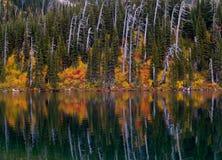 Верхнее большое отражение озера хоук стоковые изображения rf