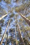 Верхние деревья стоковые фотографии rf