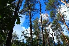 Верхние части дерева - касаться облакам стоковое фото