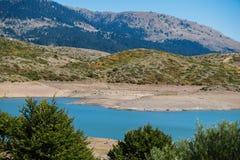 Верхние части дерева на предпосылке озера горы Стоковая Фотография RF