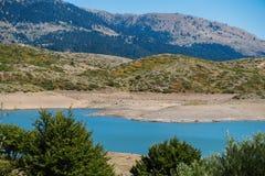 Верхние части дерева на предпосылке озера горы Стоковое Фото
