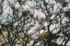 Верхние части деревьев освещенных контржурным светом по солнцу Стоковая Фотография RF